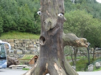 Smiley Tree